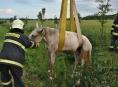 Na Litovelsku hasiči vyprošťovali koně z příkopu
