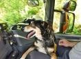 Šumperští profesionální hasiči zachránili psa