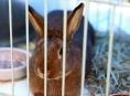 Rapotínskou výstavu chovatelů déšť nepřekazil