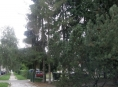 Seznam stromů určených ke kácení v  Šumperku