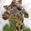 pozvánka do zoo                     foto: F. Porteš