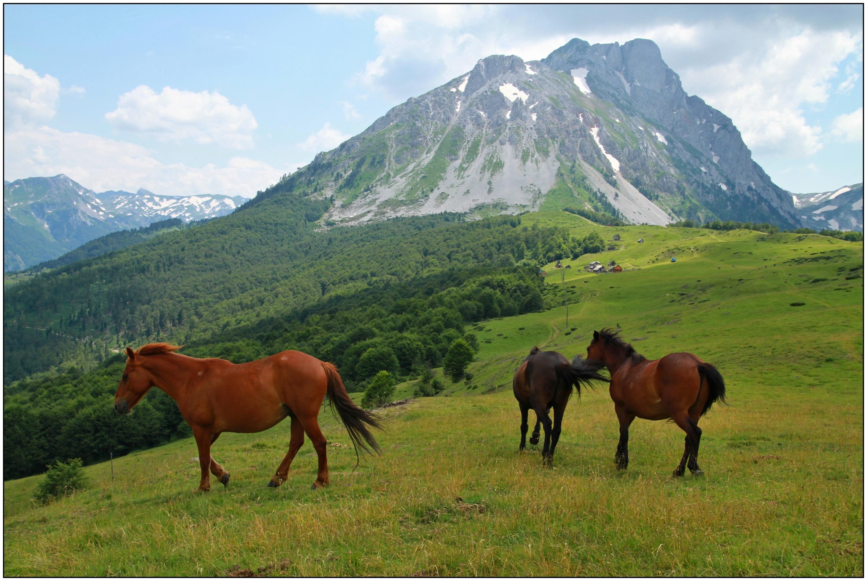 Hainal Černa hora zdroj foto: z.k.