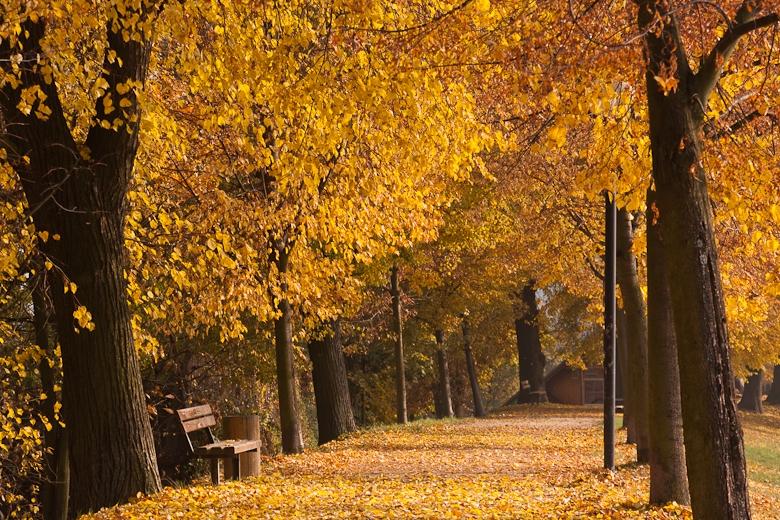 Alej podzim zdroj foto: muz