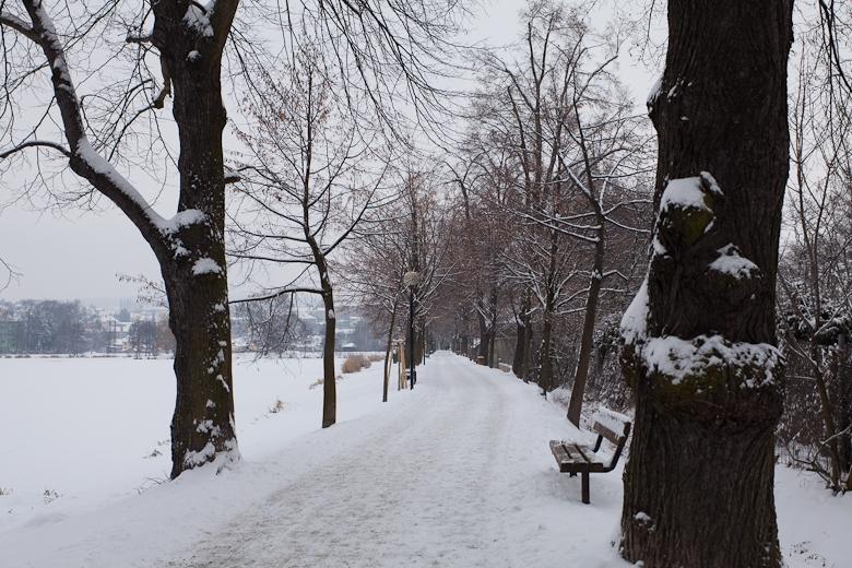 Alej zima zdroj foto: muz