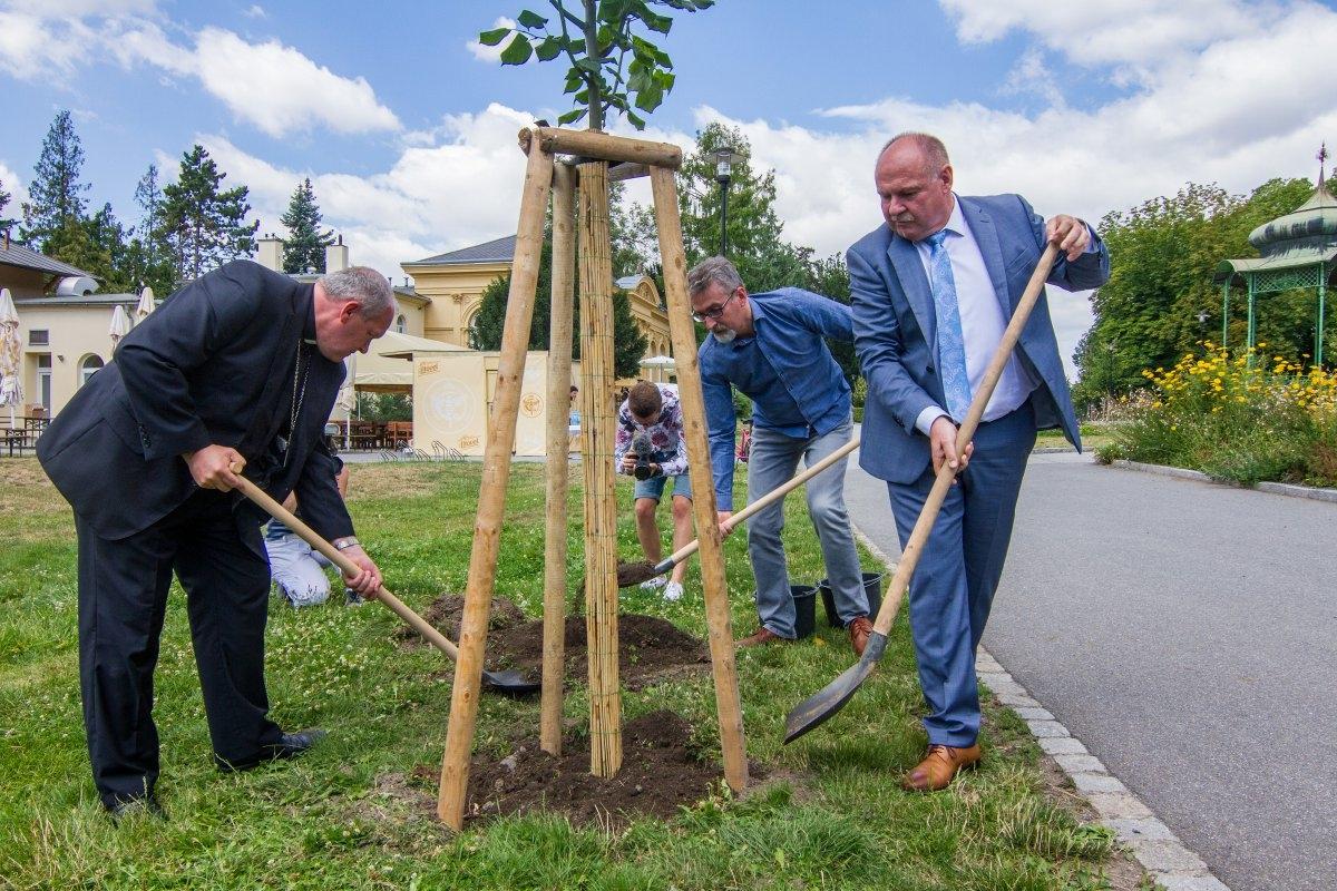 Olomouc - zasazení jubilejní lípy zdroj foto: OLK