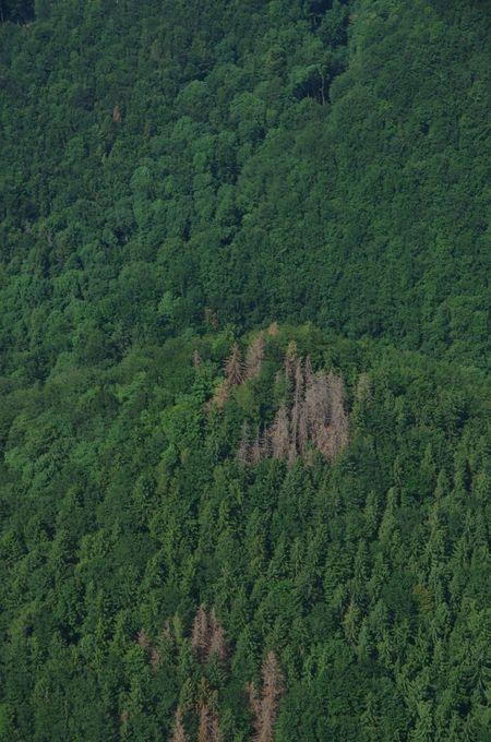 Ohniska uprostřed lesa zdroj foto: alsol