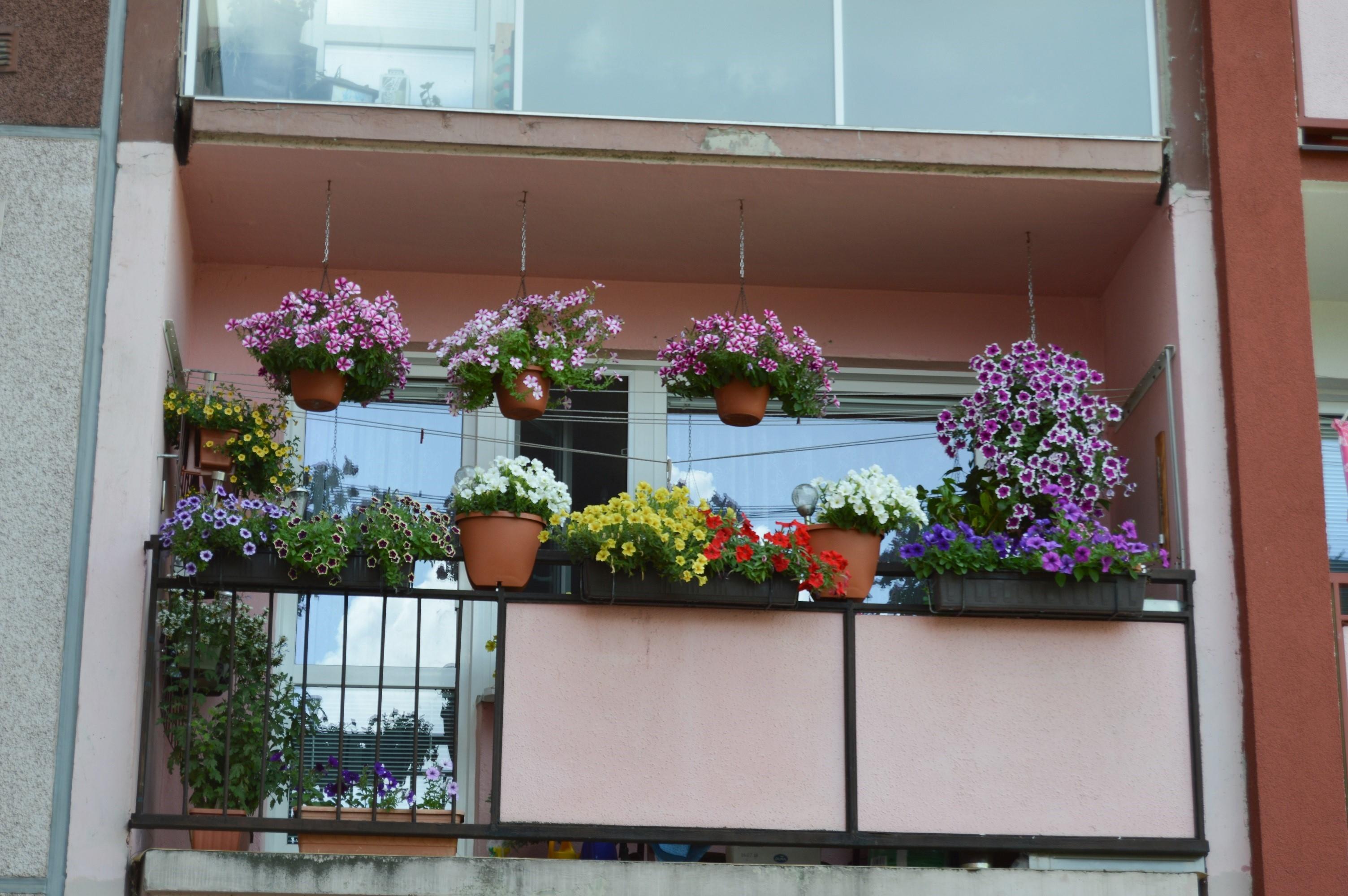 Nejkrásnější balkon bytového domu paní Polášková zdroj foto: muz