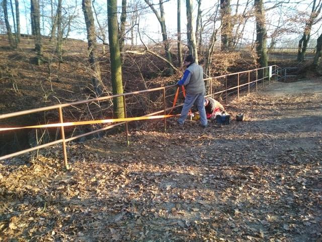 U Hranické propasti začala těžba přestárlých nebezpečných stromů zdroj foto: LČR