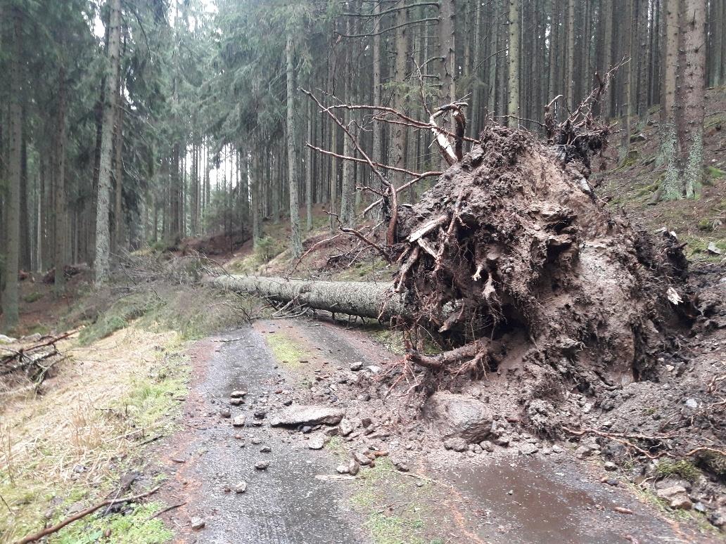 13.února - les u Pohorské Vsi, Jihočeský kraj zdroj foto: LČR