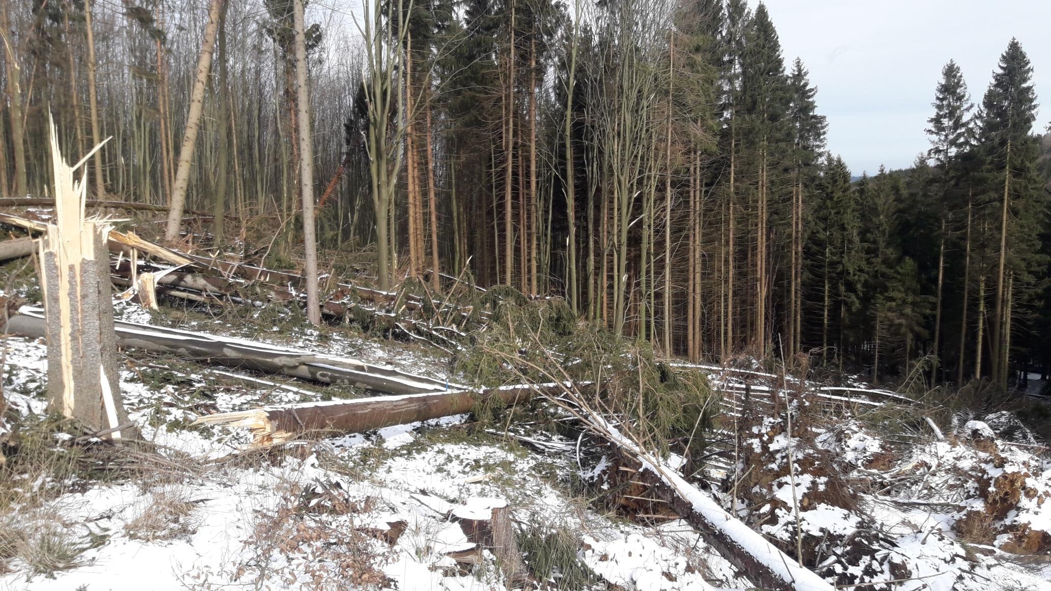 les na Kleti únor 2020 zdroj foto: LČR