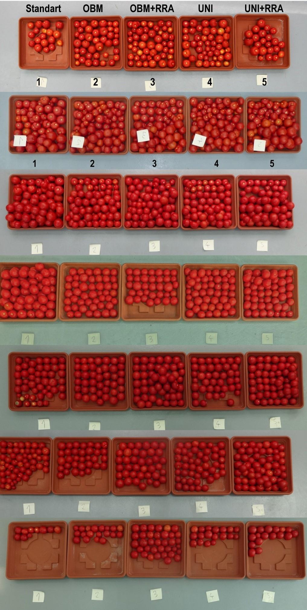 Testování VegetUP na rajčatech zdroj foto: UPOL Z. Spišek