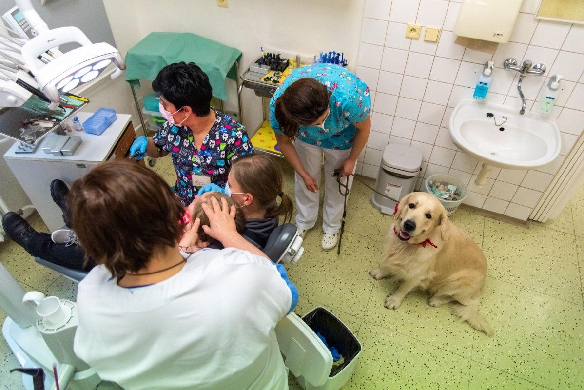 Zubní víla ve FN Olomouc má čtyřnohého pomocníka zdroj foto:FNOL