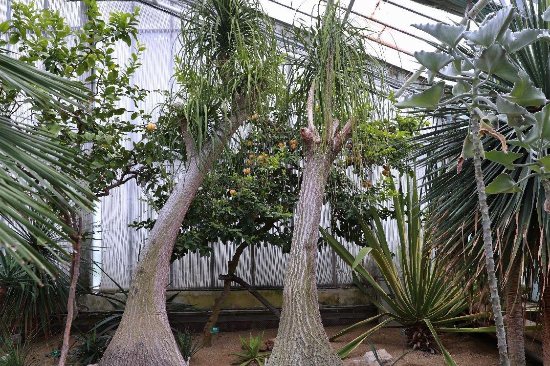 Palmový skleník - výstava zdroj foto: archiv sumpersko.net - M. Jeřábek
